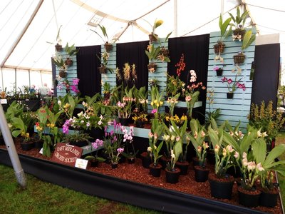 East Midlands Orchid Society