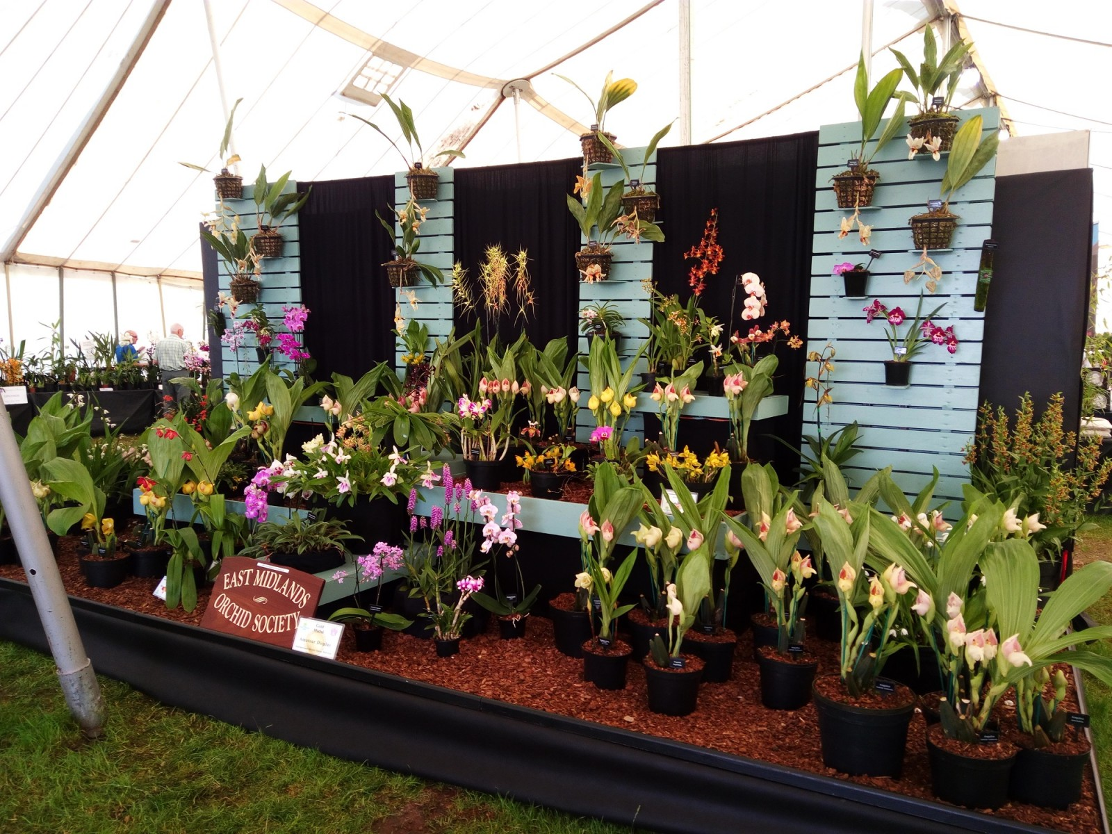 East Midlands Orchid Society 2017 Malvern